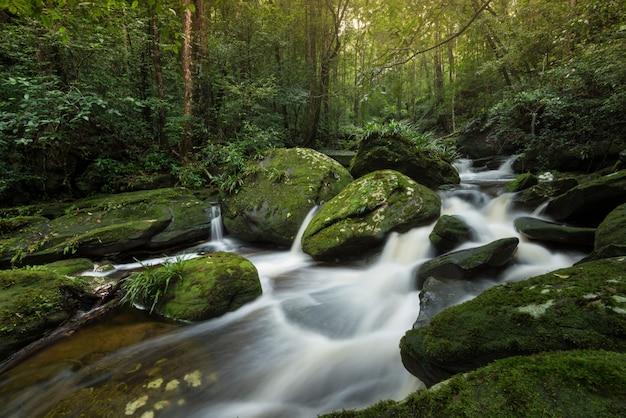 Insegua la giungla della natura del paesaggio della foresta di verde della cascata del fiume della montagna della corrente