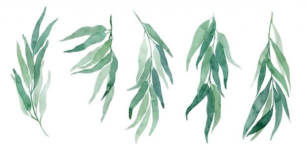 Insieme del ramo di eucalipto illustrazioni ad acquerello. elementi per la creazione di inviti e biglietti di nozze in stile eco.