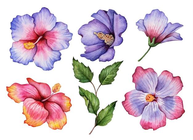 Insieme dell'acquerello di fiori, illustrazione di ibisco e foglie, elementi floreali disegnati a mano isolati su un bianco