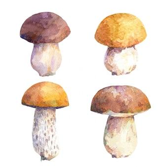 Insieme dell'acquerello di funghi commestibili.