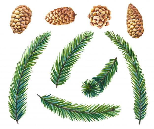 Insieme dell'acquerello di pino verde. rami di pino con albero di natale di coni.