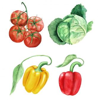 Insieme dell'illustrazione botanica dell'acquerello d'annata delle verdure
