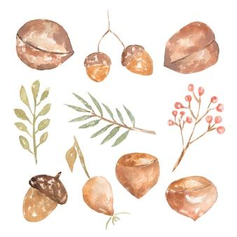 Insieme della flora del terreno boscoso di autunno dell'acquerello