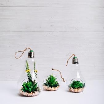 Insieme della pianta succulenta dentro la lampadina d'attaccatura di vetro sullo scrittorio bianco