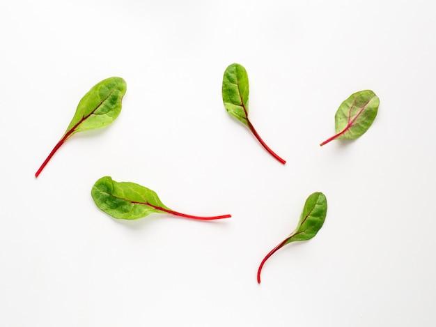 Insieme delle foglie verdi fresche della bietola o delle foglie dell'insalata della barbabietola su fondo bianco.