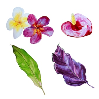 Insieme di clipart di fiori tropicali dell'acquerello. illustrazione di fiori esotici.