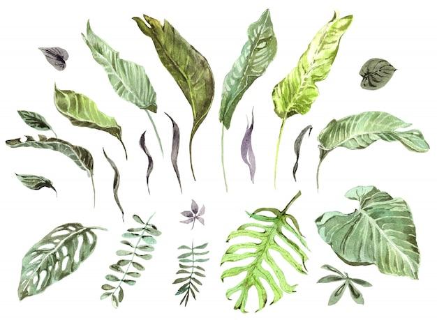Insieme tropicale dell'acquerello delle foglie di palma verdi esotiche