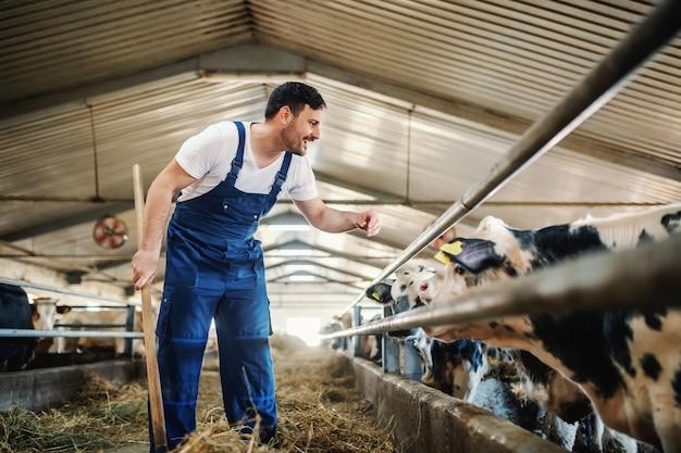 Integrale dell'agricoltore caucasico bello nei vitelli d'alimentazione complessivi con fieno. interno stabile.