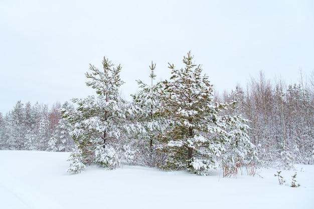 Inverno bellissimo paesaggio con alberi coperti di brina