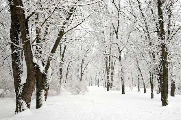 Inverno nel parco - alberi coperti di neve