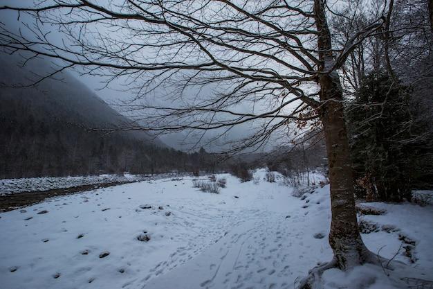 Inverno nel parco nazionale, pirenei, spagna