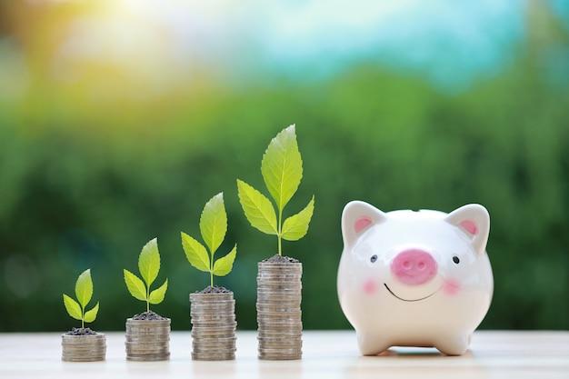 Investimento aziendale e crescita di risparmio per il concetto di pubblicità. la pianta si sviluppa sull'impilamento della moneta sullo scrittorio di legno con il fondo della natura e del porcellino salvadanaio, significato di crescita o di risparmio o di guadagnare l'aumento dei soldi