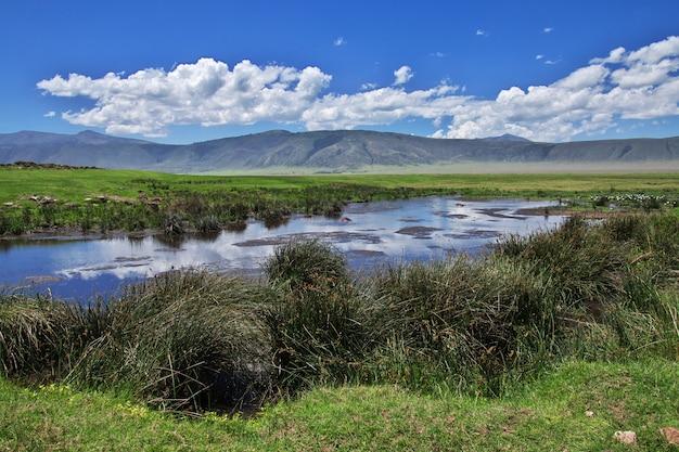 Ippopotamo, ippopotamo sul safari in kenia e tanzania, africa
