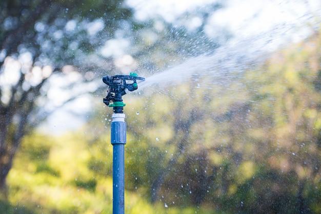Irrigato con aspersione nella piacevole luce della sera