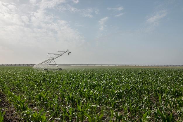 Irrigazione del campo di grano