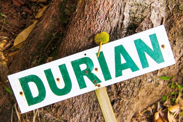 Iscriviti dicendo durian