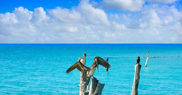 Isla mujeres island caribbean beach birds