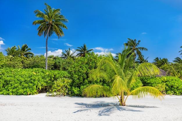 Isola tropicale con spiaggia sabbiosa alle maldive