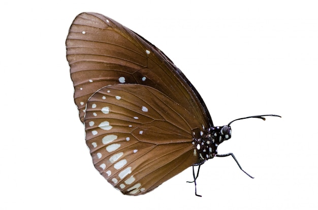 Isolato bianco del fondo di giallo arancio dei punti della farfalla