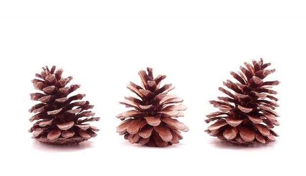 Isolato di frutti dell'albero della pigna su fondo bianco
