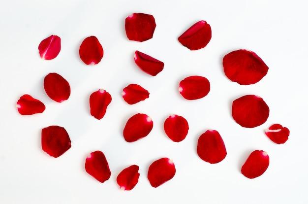 Isolato di petali di rosa su uno sfondo bianco cuore di design rosso