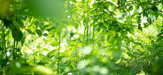 Istantanea della foresta