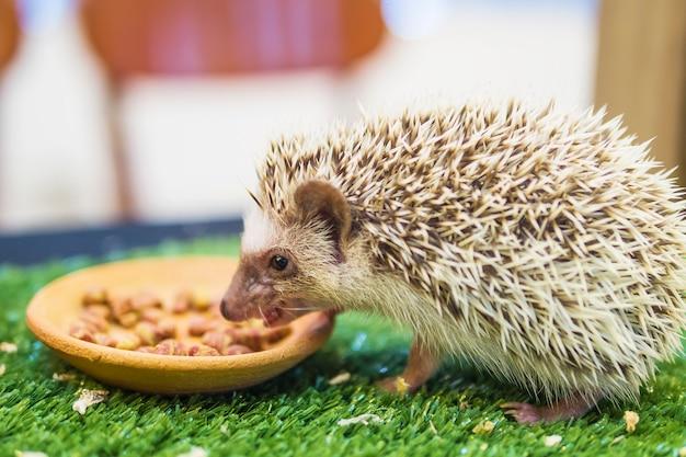 Istrice nano mangiare cibo nel giardino verde mimica