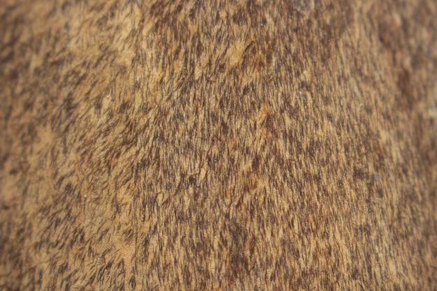 Itchi fur
