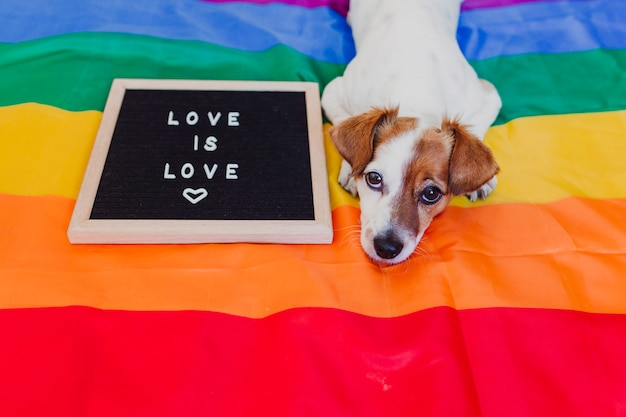 Jack russell sveglio del cane che si siede sulla bandiera dell'arcobaleno lgbt in camera da letto. bordo della lettera inoltre con il messaggio love is love. il mese di orgoglio celebra e il concetto di pace mondiale