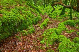 Killarney foresta hdr eco