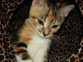 Kitty cat, la pelliccia