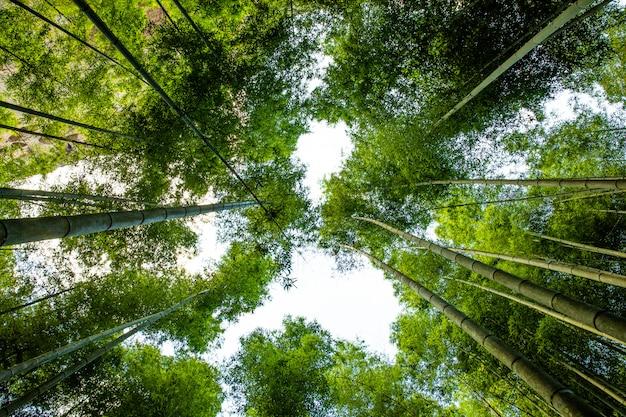 Kyoto, giappone nella foresta di bambù.