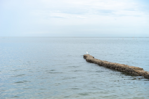 L'acqua nel mare è limpida e bella. onde in superficie, colpendo la riva. altre rocce sulla spiaggia. l'uccello si trova sulla pietra.