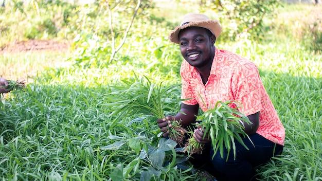 L'agricoltore africano sta mantenendo la gloria mattutina nel giardino.