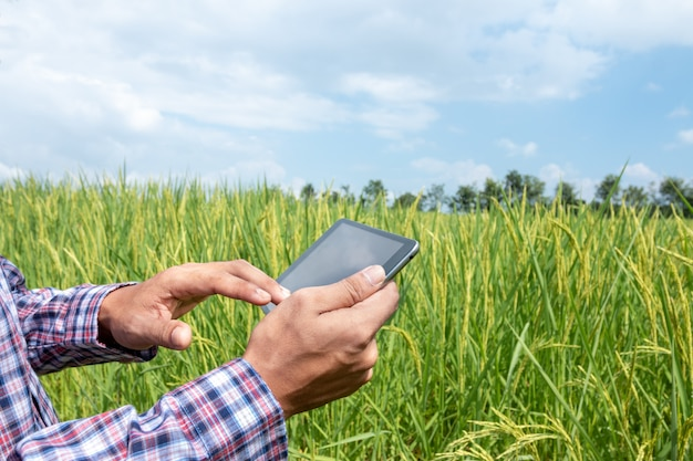 L'agricoltore astuto tiene una compressa nel giacimento del riso. agricoltura intelligente e concetto di agricoltura digitale
