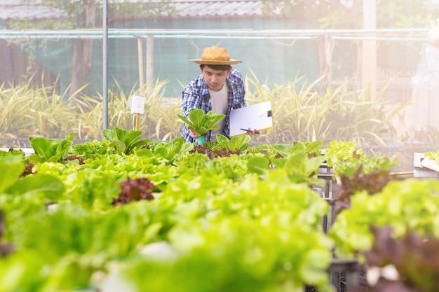 L'agricoltore biologico controlla il loro biologico per sviluppare ortaggi coltivati biologici con copyspace.