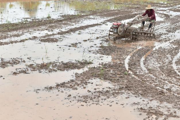 L'agricoltore che ara nel giacimento del riso prepara il riso della pianta nell'ambito della luce solare