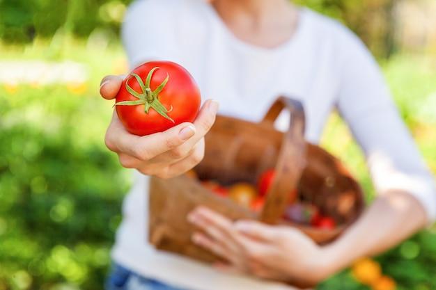 L'agricoltore della giovane donna passa il canestro della tenuta che seleziona i pomodori organici maturi freschi in giardino
