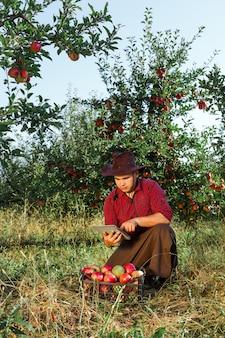 L'agricoltore raccoglie le mele mature nel giardino