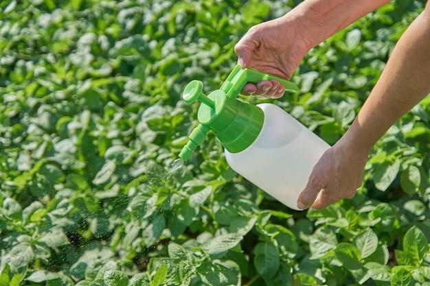 L'agricoltore spruzza il pesticida con lo spruzzatore manuale contro gli insetti sulla piantagione di patate in giardino di estate. concetto di agricoltura e giardinaggio