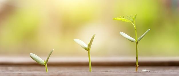 L'agricoltura che pianta semina la crescita, concetto di growht di affari. proporzioni 21: 9