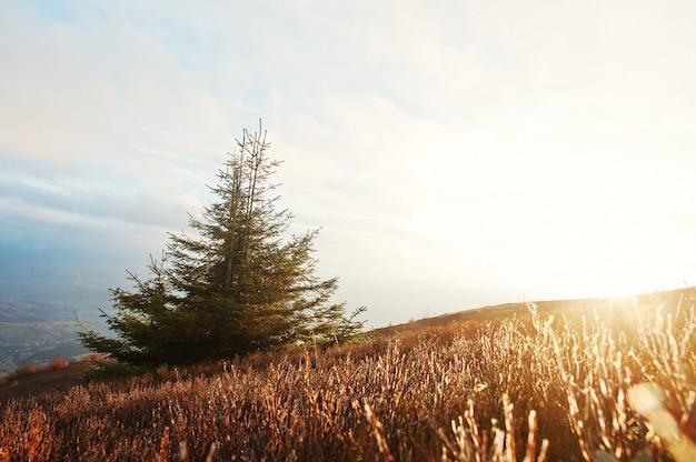 L'albero del nuovo anno con gelo all'alba maestosa nelle montagne abbellisce.