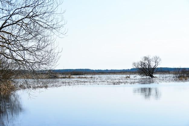L'albero del paesaggio si sviluppa in un campo con acqua da un fiume