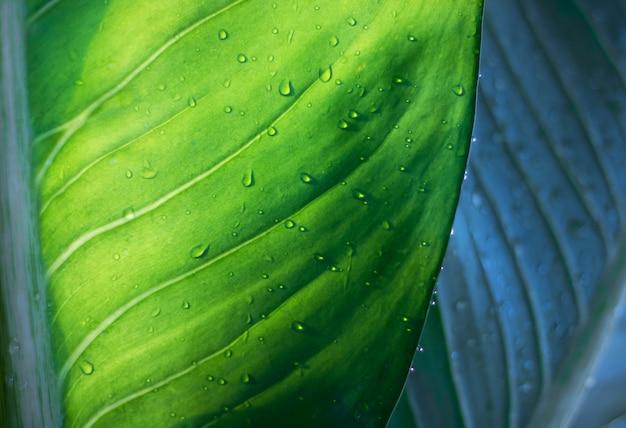 L'albero lascia il bokeh per il fondo della natura e conserva il concetto verde