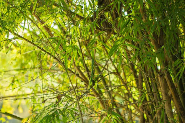 L'albero lascia la natura fondo e risparmi il verde