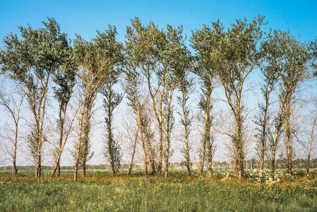 L'albero malato con mancanza di foglie dopo aver usato pesticidi, erbicidi glifosati e diserbanti mostra un enorme problema di ecologia