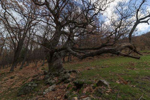 L'albero secco