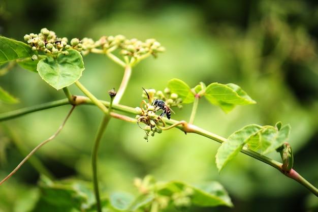 L'ape impollina il fiore dell'erba nel prato e nel giardino