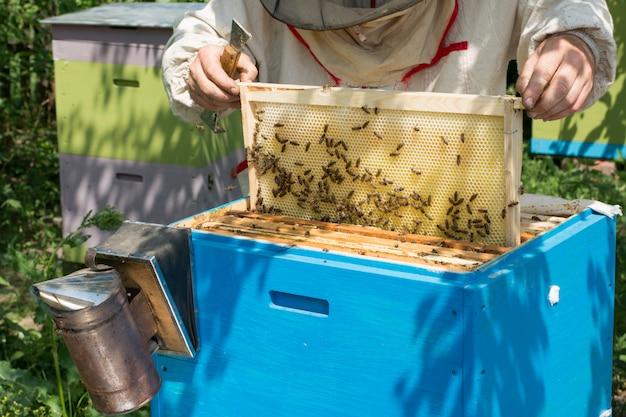 L'apicoltore controlla l'alveare. apicoltore raccolta miele