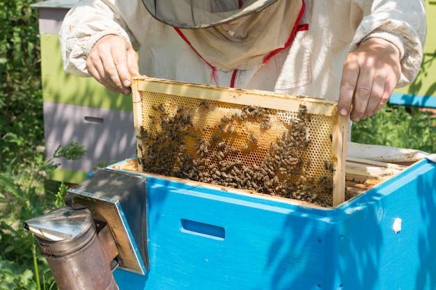 L'apicoltore controlla l'alveare